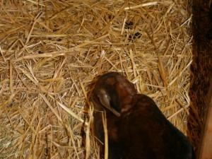 Mein_Tier2006-019