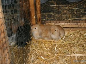 Mein_Tier2006-021