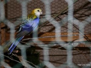 Mein_Tier2006-036
