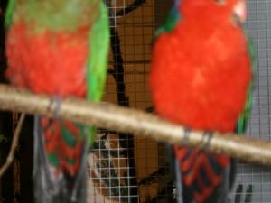Mein_Tier2006-047